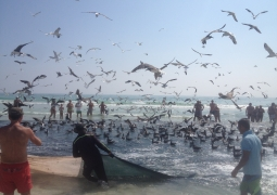 Salalah_beach_fishing