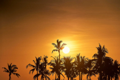 fanar-hotel-and-residences-hawana-salalah-oman-sunset-over-palm-trees