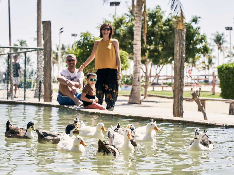 A family is enjoying the vacation by watching ducks in Fanar Hotel Mini Zoo in Hawana Salalah Oman